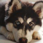 Haal je een hond in huis? Gun hem een fijne hondenmand