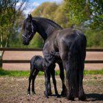 Wanneer heeft jouw paard omeprazole nodig?